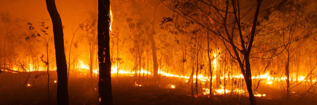 Data science vs social media disinformation: the case of climate change and the Australian bushfires